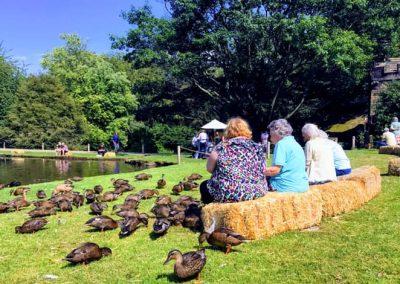 Feeding the ducks-min (1)